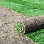 Plant Grass seeg or Sod?