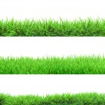 what grass type