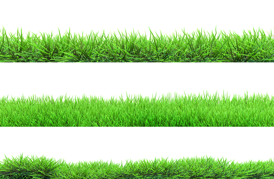 What Grass Type Has To Do With Edging
