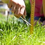 what is the proper height to cut grass