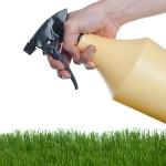 get perfect grass
