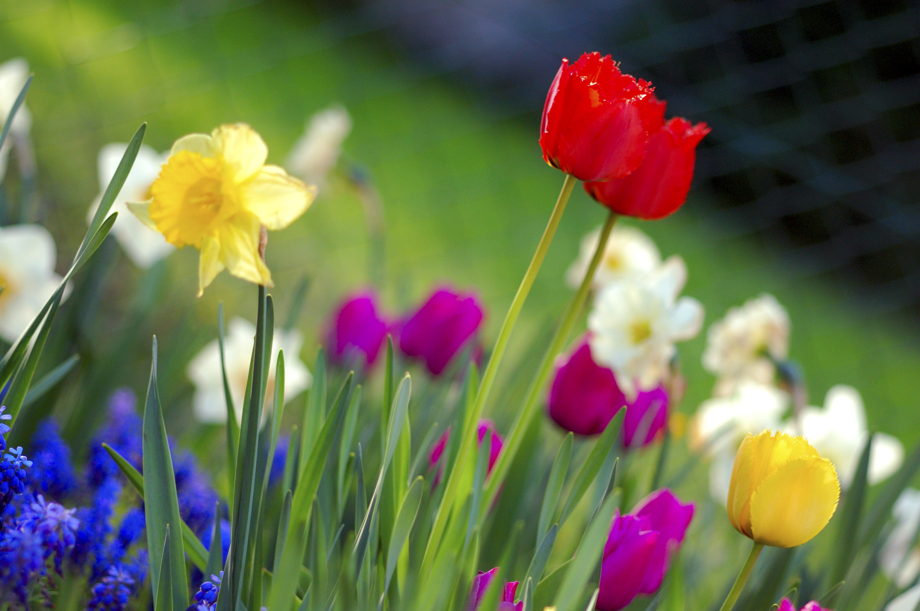 Best time to reseed your lawn
