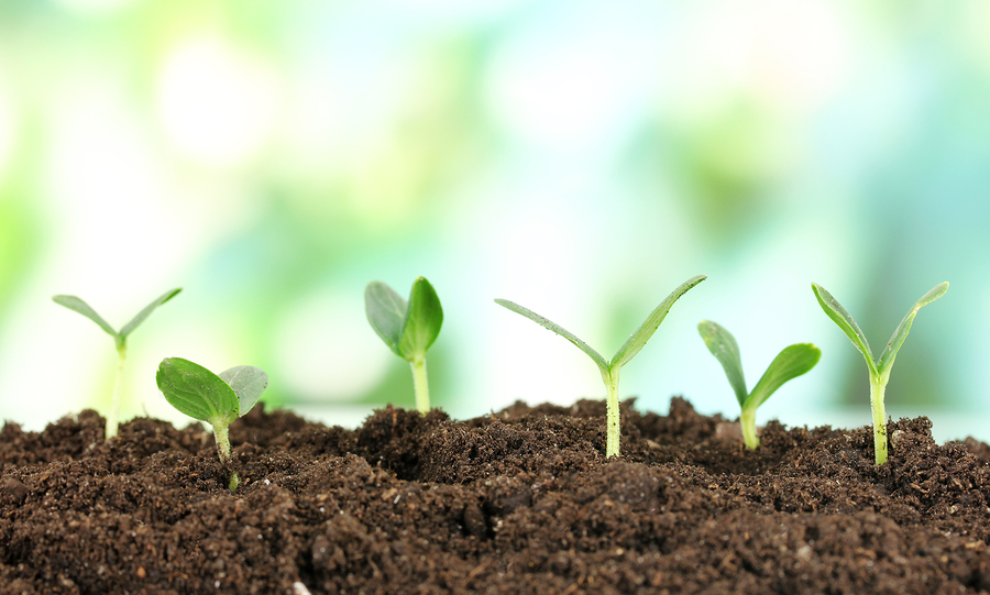 how to fertilize grass?